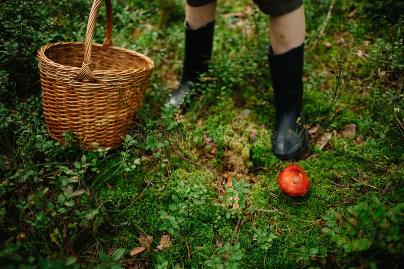 Sélection des champignons et des canneberges dans la forêt pendant l'été ou l'automne tôt Jours d'été Les champignons et les baie photos libres de droits