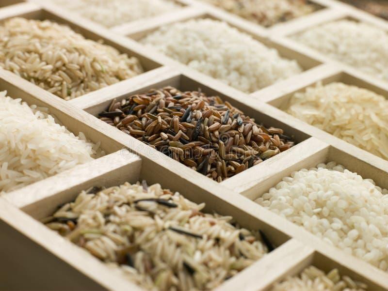 Sélection des riz photo libre de droits