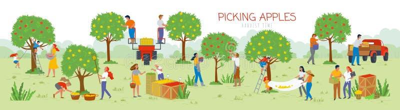 Sélection du temps de récolte de pommes, les gens dans le jardin illustration libre de droits
