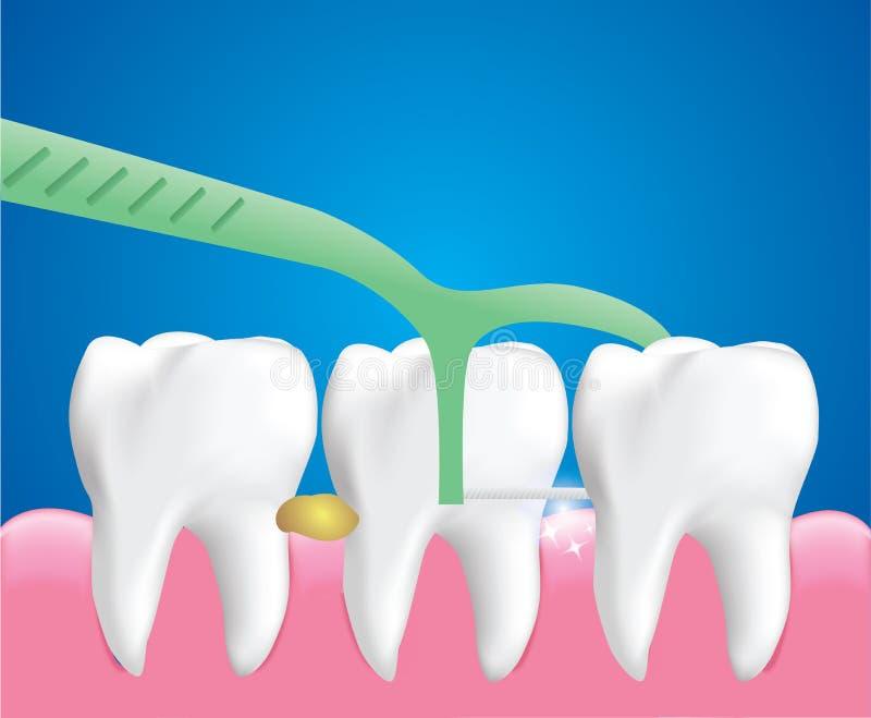 Sélections de fil dentaire, outil de nettoyage dentaire, concept de soins dentaires, vecteur illustration libre de droits