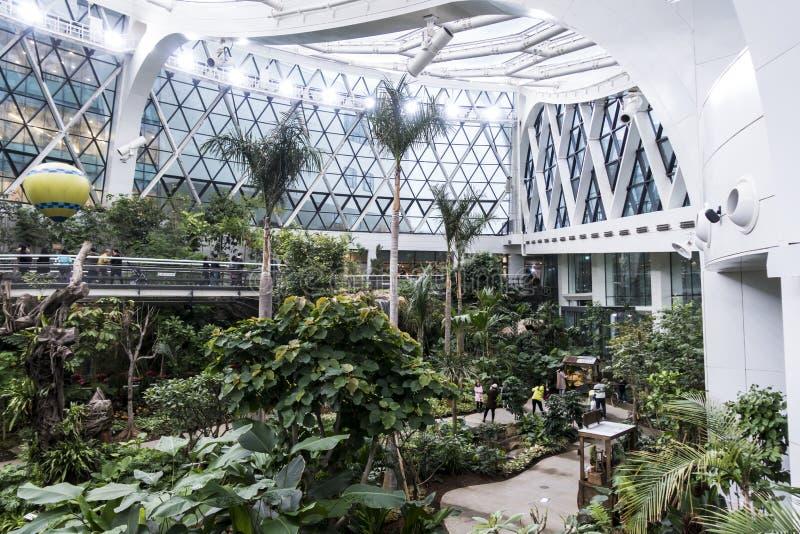 Séoul, Corée du Sud - 4 février 2019 : à l'intérieur de la vue de la serre chaude du parc botanique de Séoul, Séoul, Corée du Sud image libre de droits