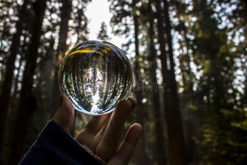 Séquoia Forest Captured dans la réflexion de boule en verre tenue dans Fingert photographie stock libre de droits