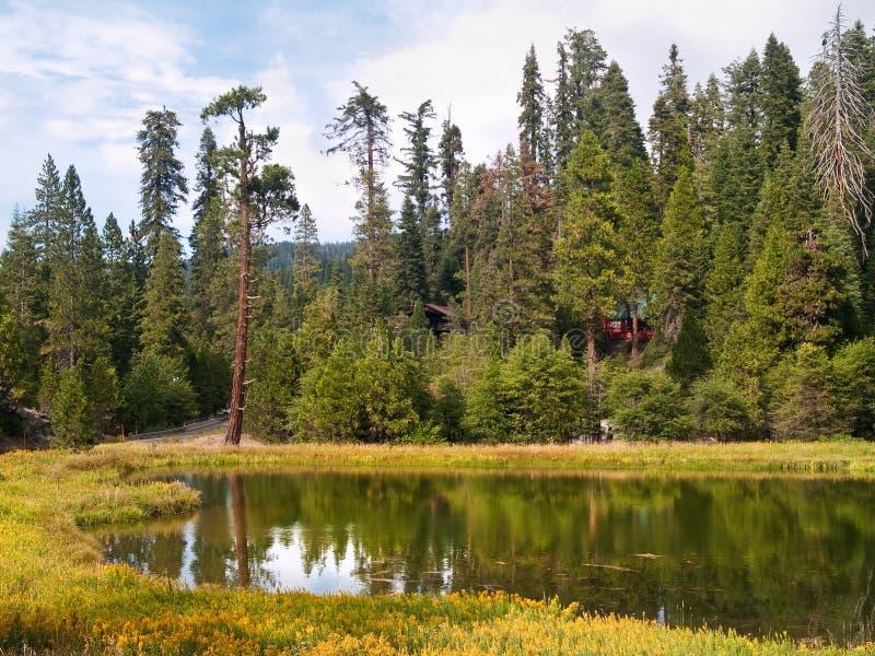 Séquoias de plantation de Mariposa images libres de droits
