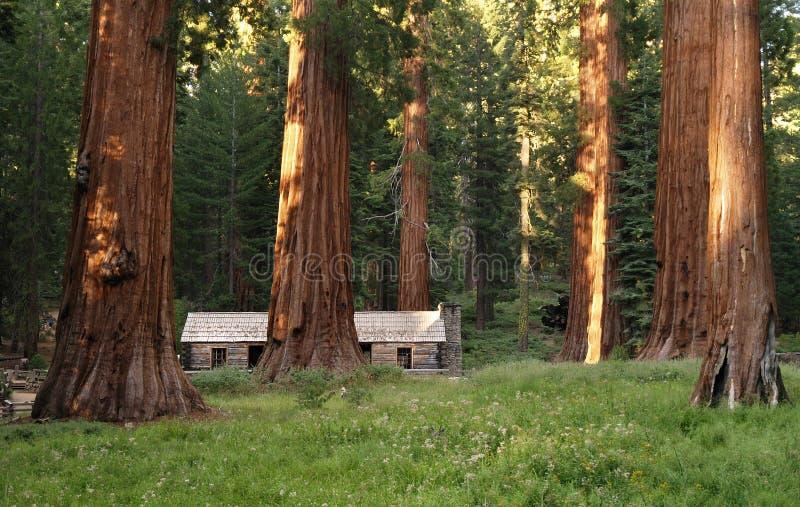 Séquoias de plantation de Mariposa photos libres de droits