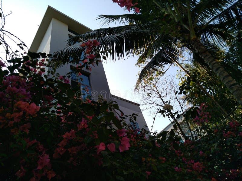 Sérénité d'aube d'été photographie stock libre de droits