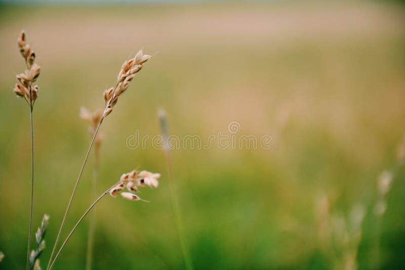 Sérénité de Sawgrass images libres de droits