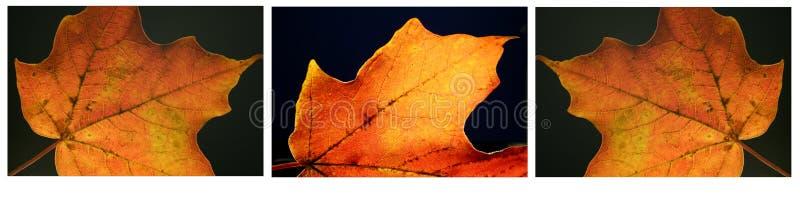 Série da folha da queda foto de stock