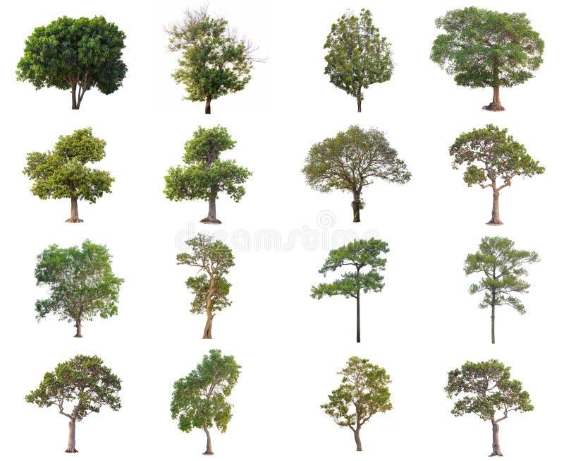 série de beaucoup arbre dans l'isolat d'été sur le fond blanc photographie stock libre de droits