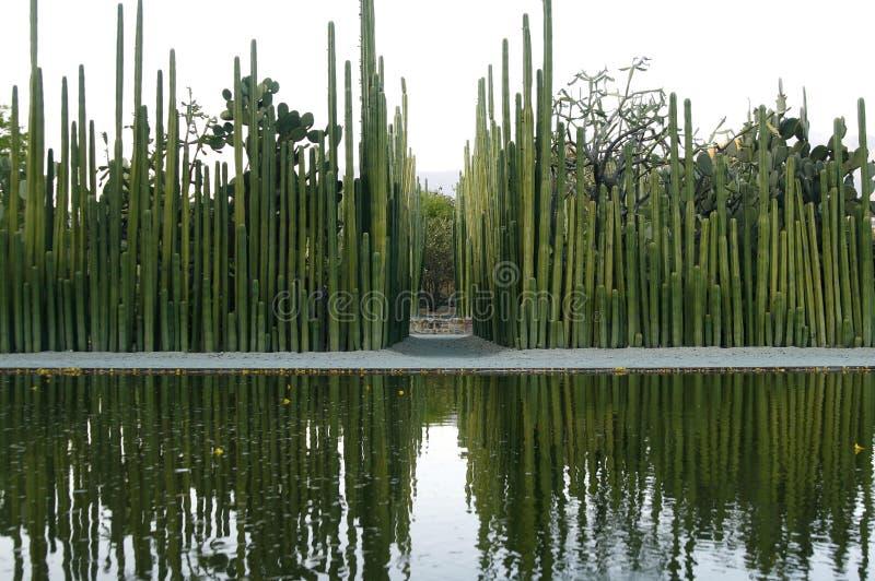 Série de cactus dans un jardin botanique au Mexique photos libres de droits