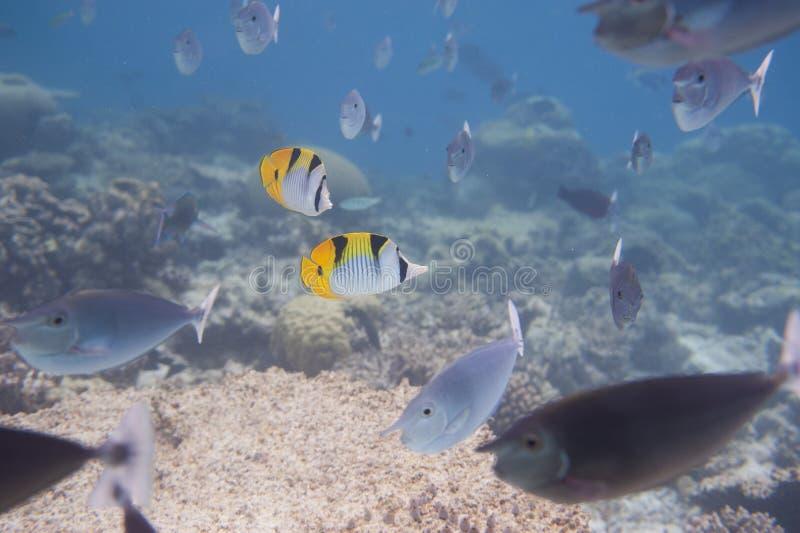 Série de poissons image libre de droits