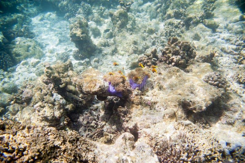 Série de poissons photo libre de droits
