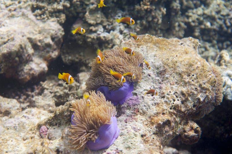 Série de poissons image stock