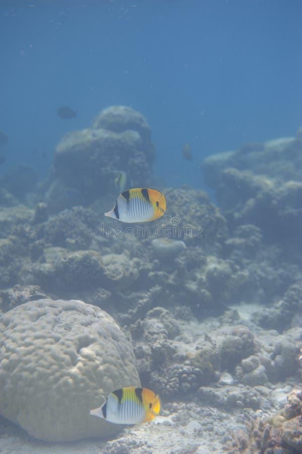Série de poissons photographie stock libre de droits