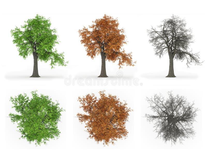 Série do ciclo do ano da árvore de cinza imagens de stock