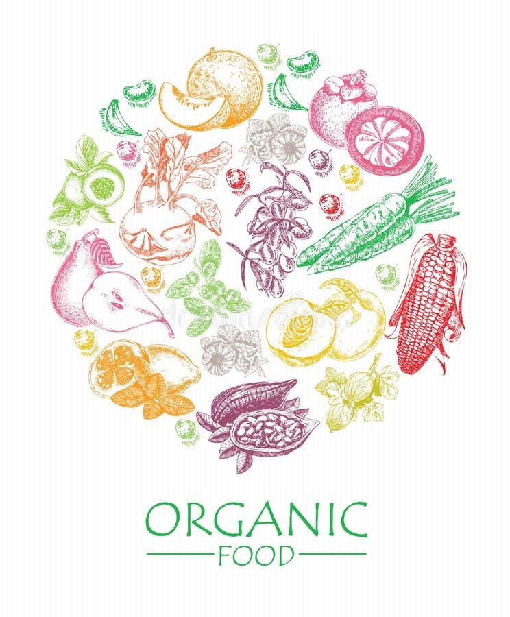 Série - fruits, légumes et épices de vecteur Aliment biologique Ensemble de légumes, de fruits et d'épices Repas de ferme affiche illustration libre de droits