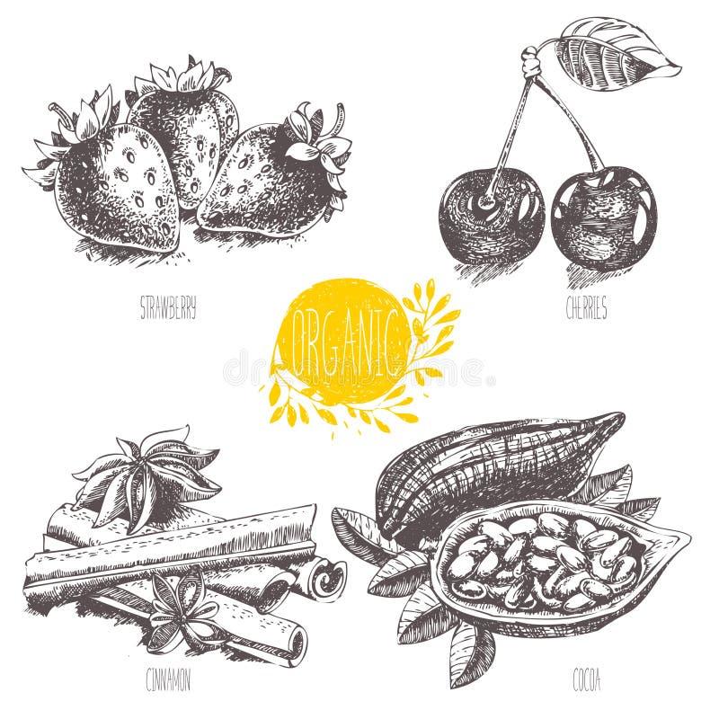 Série - fruto, vegetais e especiarias do vetor esboço Alimento saudável Gráfico linear Grupo de morango, cereja, cacau, canela ilustração stock
