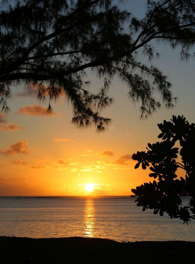 Série tropical #30 foto de stock royalty free
