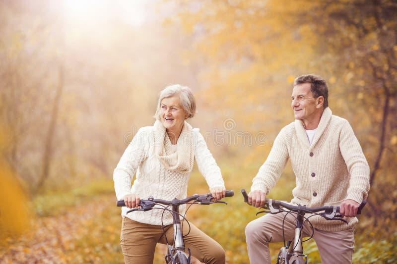 Sêniores ativos que montam a bicicleta imagens de stock royalty free