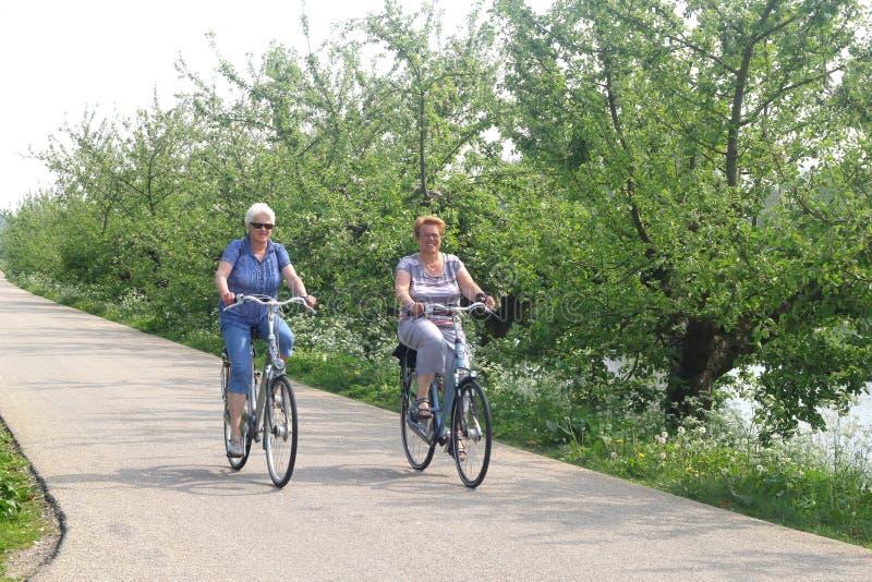 Sêniores do ciclismo no dique famoso de Apple, Betuwe, NL imagens de stock royalty free
