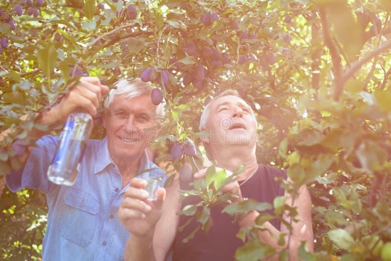 Sêniores entusiasmado com álcool sob a árvore de ameixa imagens de stock