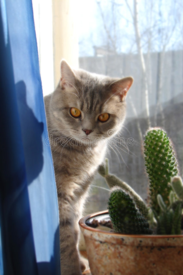 Sí, soy un gato foto de archivo