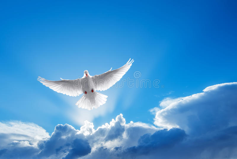 Símbolo da pomba do branco da fé foto de stock royalty free