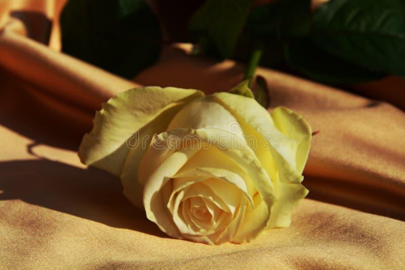 Símbolo de la boda de la rosa del blanco, fondo elegante imagenes de archivo