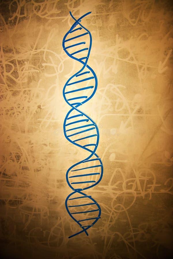 Símbolo de la DNA en tarjeta de escuela sucia fotos de archivo