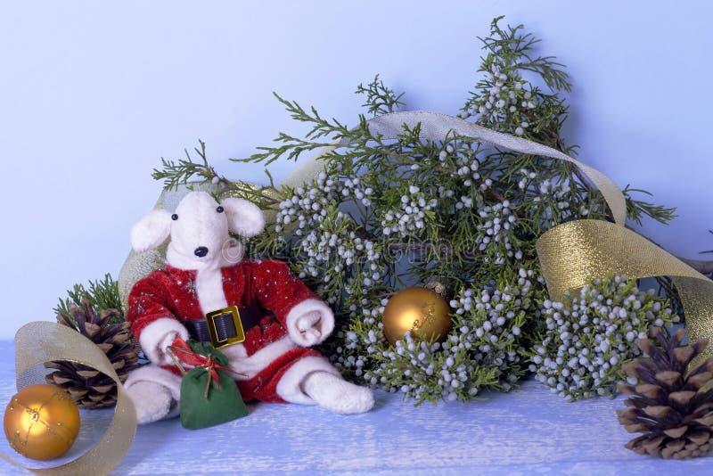 Símbolo de 2020 no calendário oriental Rato branco em um traje vermelho de Santa Claus perto do ramo do zimbro e dourado bonitos foto de stock royalty free
