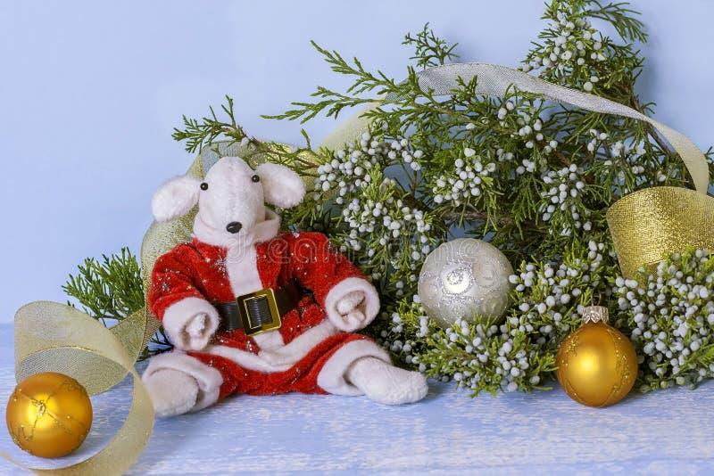 Símbolo de 2020 no calendário oriental Rato branco em um traje vermelho de Santa Claus perto do ramo do zimbro e dourado bonitos foto de stock