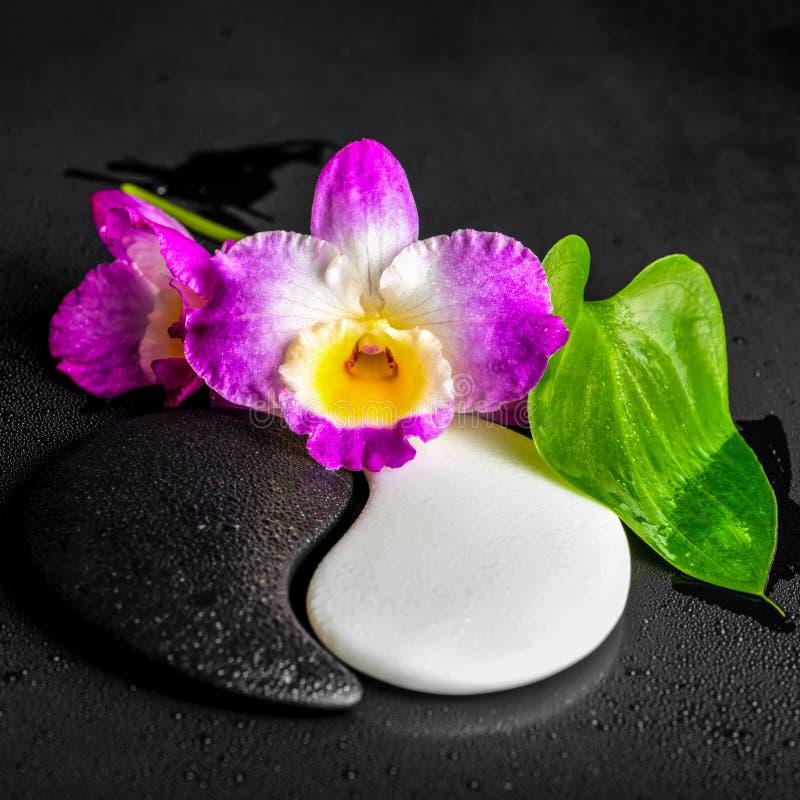 Símbolo de Yin-Yang da textura de pedra com o lírio de Calla verde da folha e imagem de stock royalty free