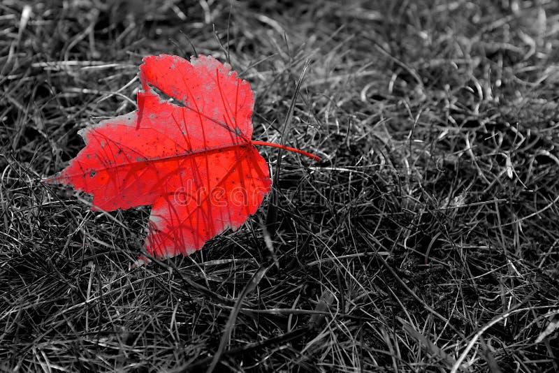 Símbolo do outono imagens de stock