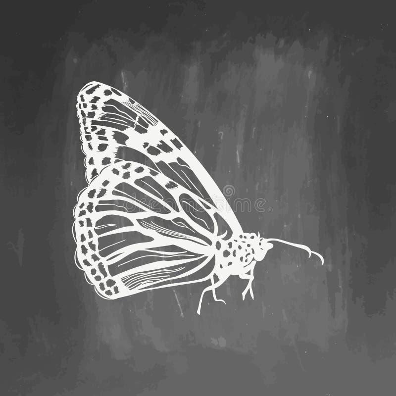 Símbolo exhausto del bosquejo de la mariposa de la mano aislado en la pizarra Elemento de la mariposa en estilo de moda stock de ilustración
