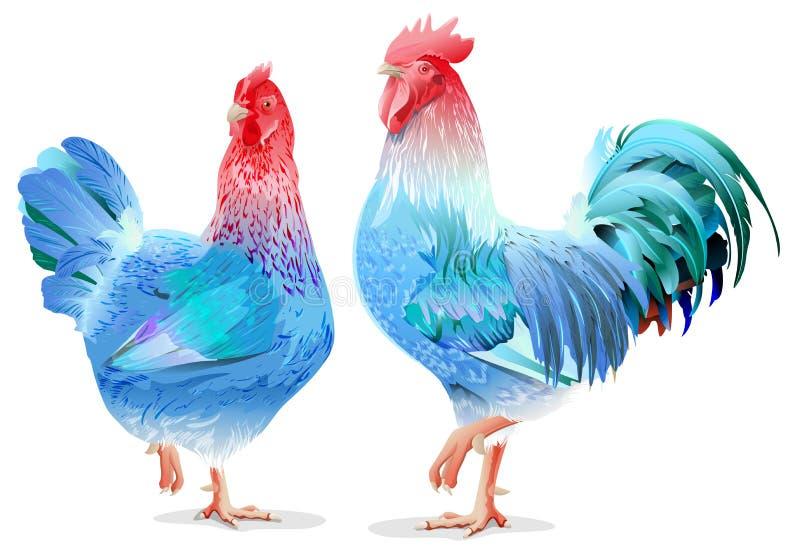 Símbolo femenino azul 2017 del gallo y del pollo por el calendario chino imágenes de archivo libres de regalías