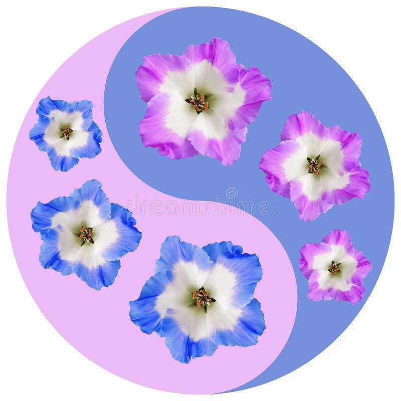 Símbolo floral de Yin Yang Geranio, Pelargonium foto de archivo libre de regalías