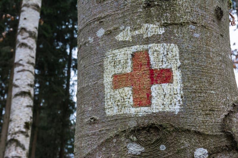 Símbolo médico da emergência da cruz vermelha pintado na floresta do tronco de árvore fotografia de stock royalty free