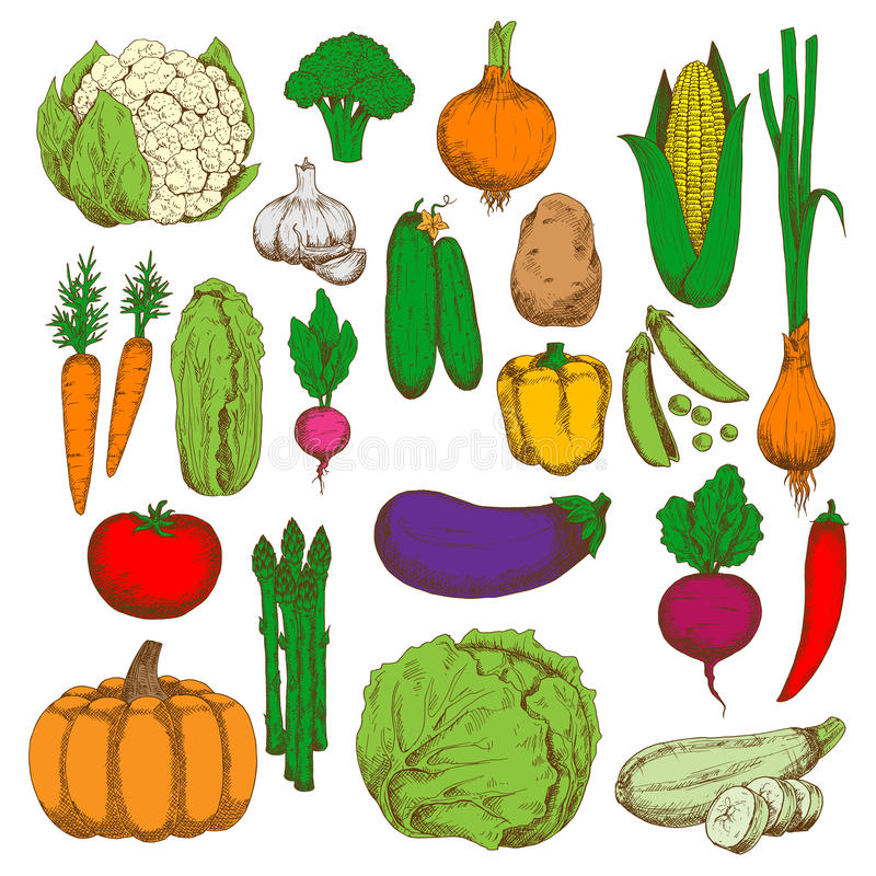 Símbolo saudável e suculento do esboço dos legumes frescos ilustração do vetor