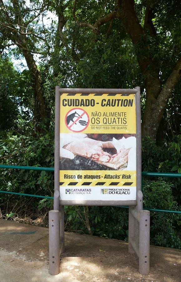 Söder - amerikansk Coati på den Iguazu nationalparken, Brasilien arkivfoto