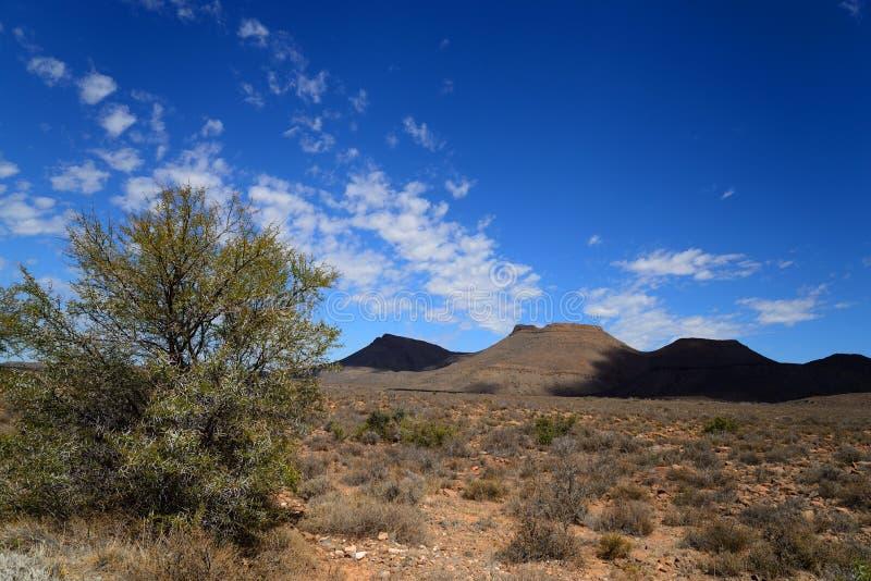 söder för nationalpark för liggande för karoo för kullar boendeafrica för ointressant udd överträffade plana den västra besökare royaltyfria foton