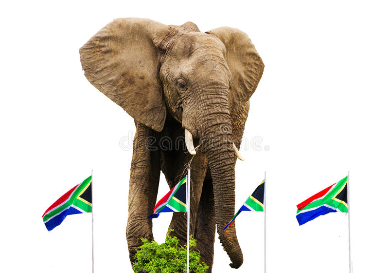 Södra - afrikanflaggor och elefant royaltyfri bild