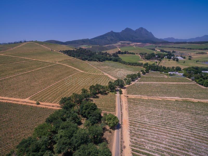 Södra - afrikanska vingårdar arkivfoto