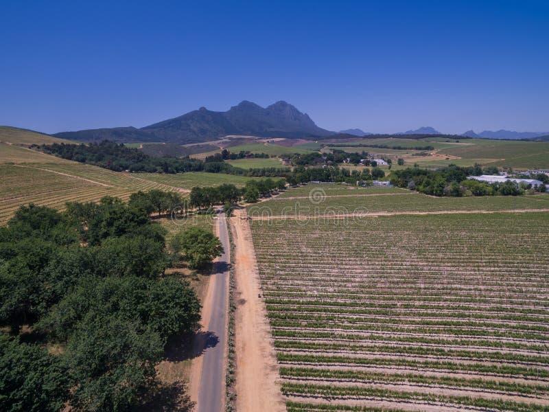 Södra - afrikanska vingårdar arkivfoton