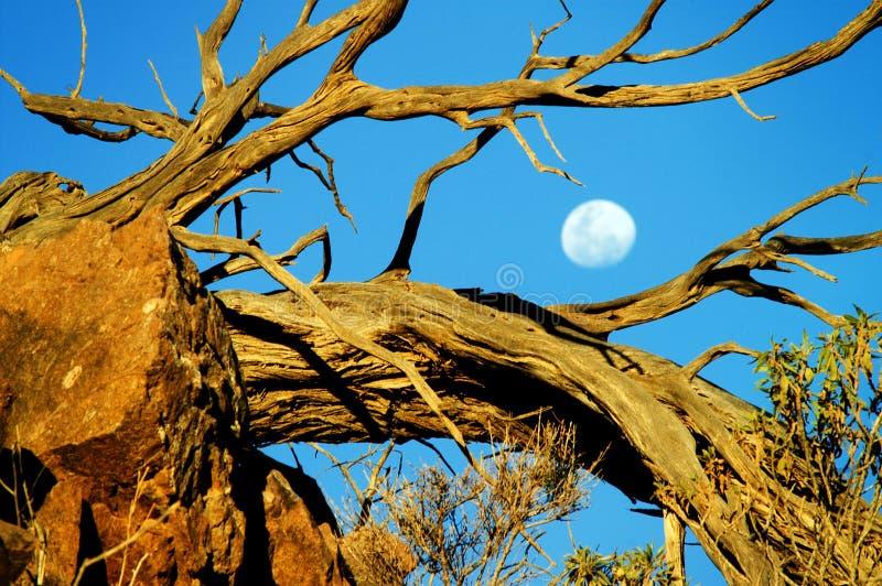 södra Australien royaltyfria foton