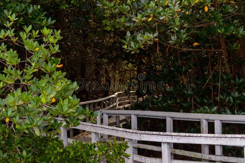 Södra Florida parkerar strandpromenader in i mangrovarna royaltyfri bild