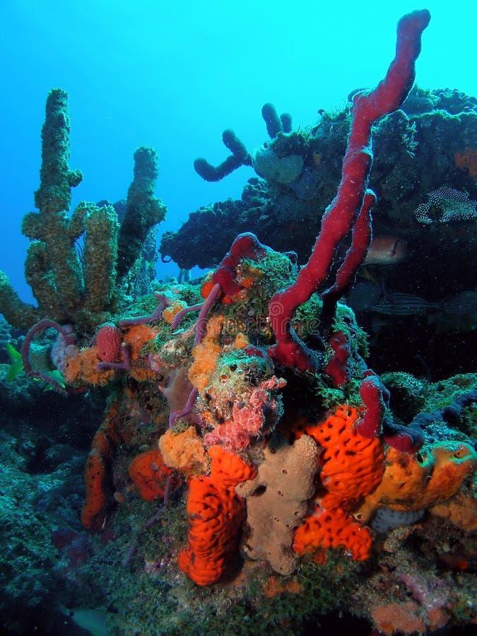 södra korallflorida rev royaltyfri foto