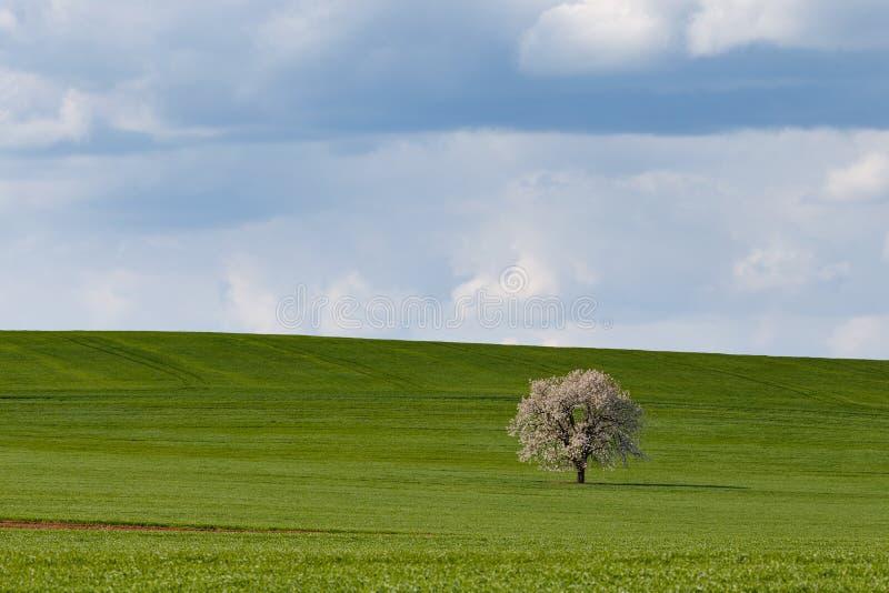 Södra Moravian fält, Tjeckienfält, moravian kullar royaltyfri foto