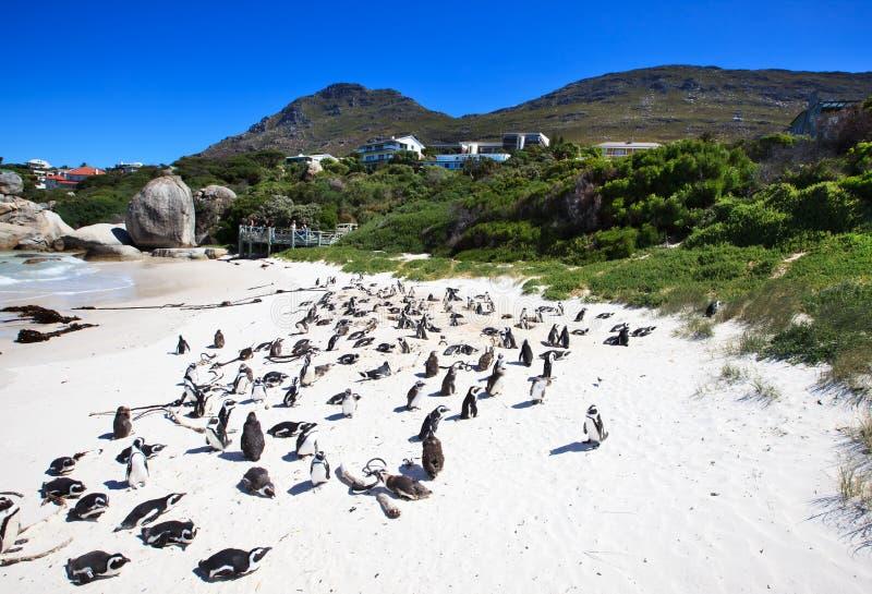 södra pingvin för africa strandstenblock arkivfoto