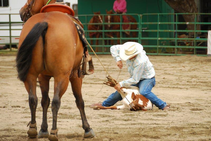 Södra rodeo arkivfoton