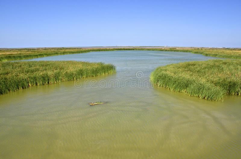 Södra Texas Wetlands arkivfoton