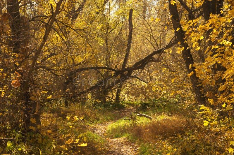 Sökväg till hösten i den sceniska bildskogens skog Lägeslandskap arkivfoton